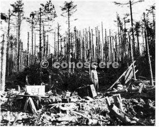 linea gotica ARTIGLIERIA AREA  uomo aiuto medico fa una pausa nella sua ricerca di vittime sotto i pini
