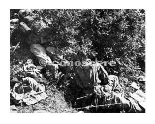 linea gotica ENEMY CASUALTIES These paratroopers of the 12th Parachute Regiment were found on the slopes of Monte Altuzzo