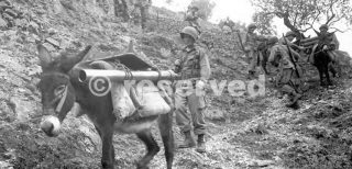 PACK TRAIN IN THE VENAFRO AREA_wwii