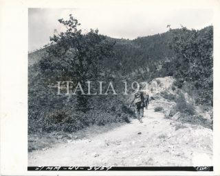 339th Inf Regt 85th Div ascending only trail in this mountain monte verruca 1944