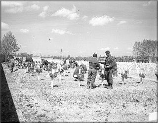 decorazione tombe mostra un gruppo di soldati 10divisione di montagna che decorano le tombe dei loro compagni al cimitero militare americano a castelfiorentino